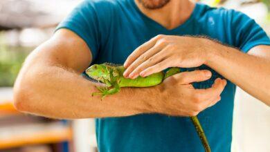 Top 10 reptielen als huisdier